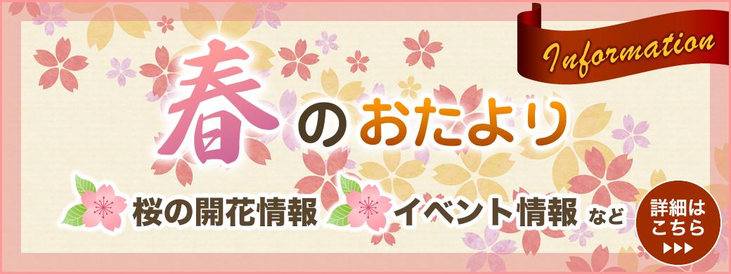 春のおたより 桜の開花情報イベント情報など